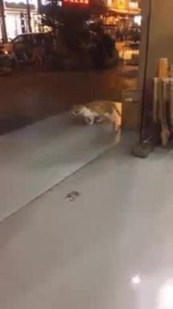 Billy Cat