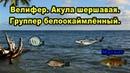 РР3 Велифер Группер белоокаймленный Акула шершавая Павлинний группер мутант