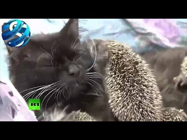 Ёжкин кот существует
