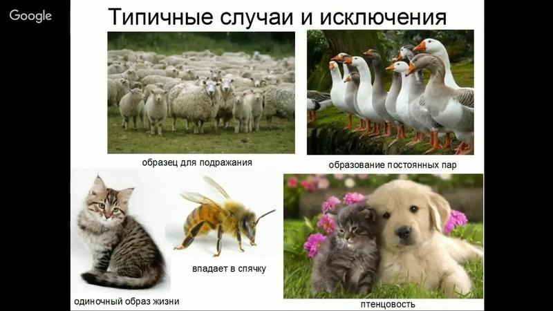 Человек и собака одомашнивание или эволюция