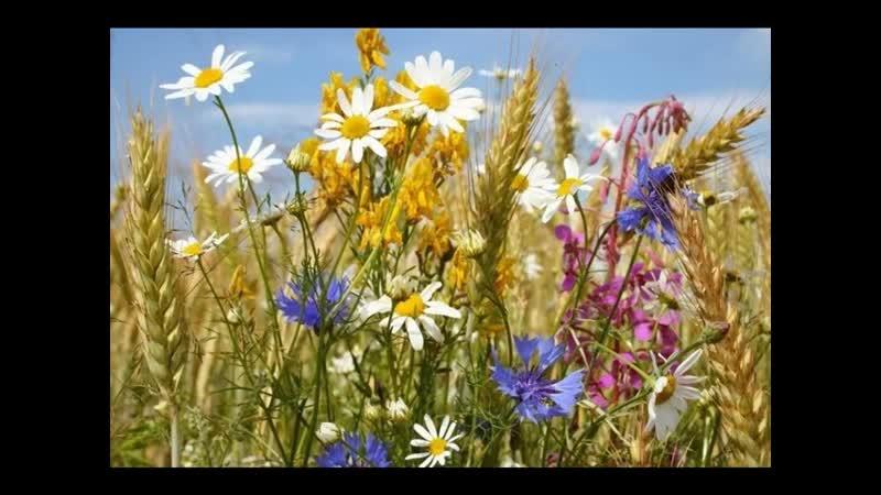 И А Бунин Полевые цветы читает Протопопова О И