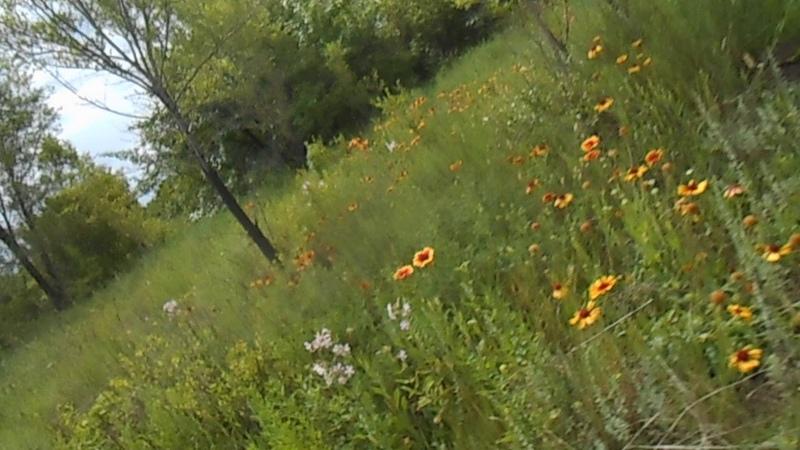 Щебет птиц на цветочной поляне