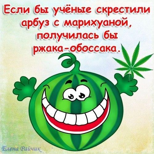 Что будет если скрестить марихуану с арбузом что можно зделать с конопли