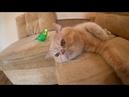 Кот и говорящий попугай друзья. Смешные животные.