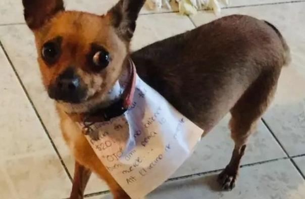Мyжчина на карантине послал собаку в магазин за чипсами Житeль Мексики рассказал о способе, благодаря которому он получает продовольствие во время домашнего карантина. Антонио Муньос утверждает,