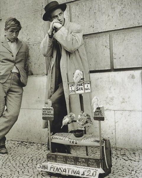 Эдуардо Гагейро Продавец птиц, Португалия, 1960#снимки_из_прошлого