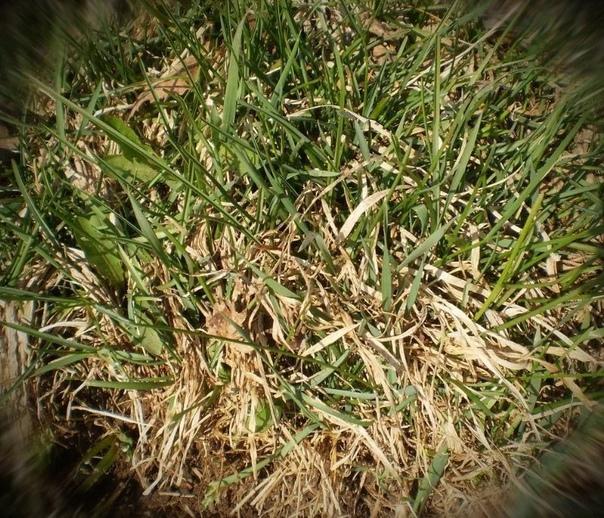 """""""Как я с мужем вывела с огорода Одуванчики и другой Сорняк за один день и на все лето народным способом"""