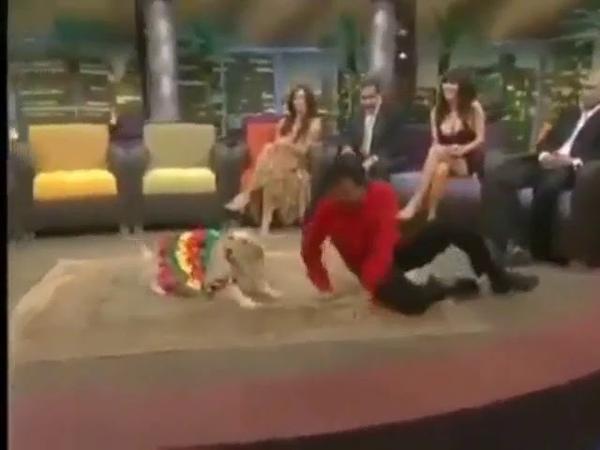 Собака танцует лучше хозаина Ламбада