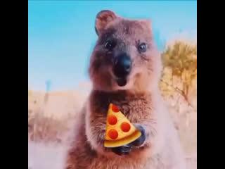 Когда привезли пиццу и ты сидишь ешь довольный!