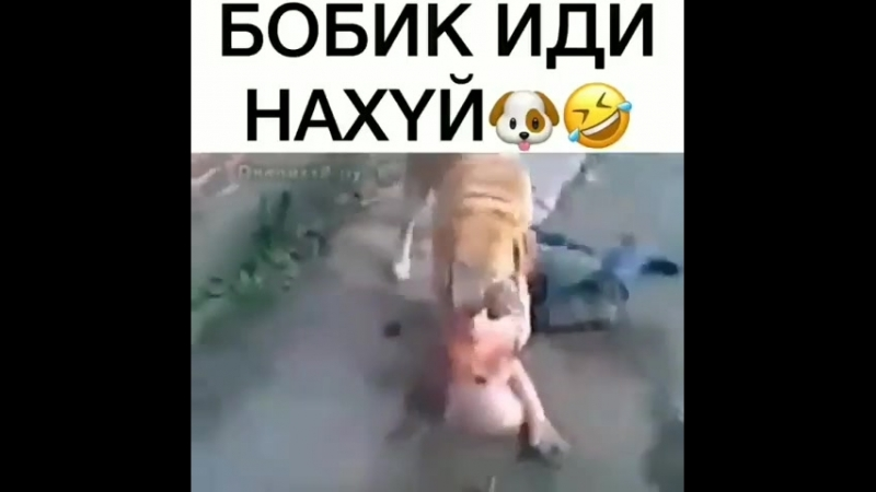 BOBIK_IDI_NA_HJ-AKULA.IN.mp4