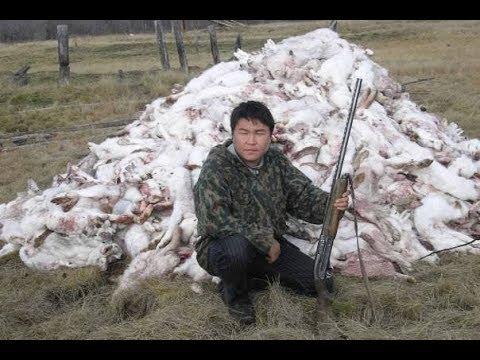 Охота на зайца троплением
