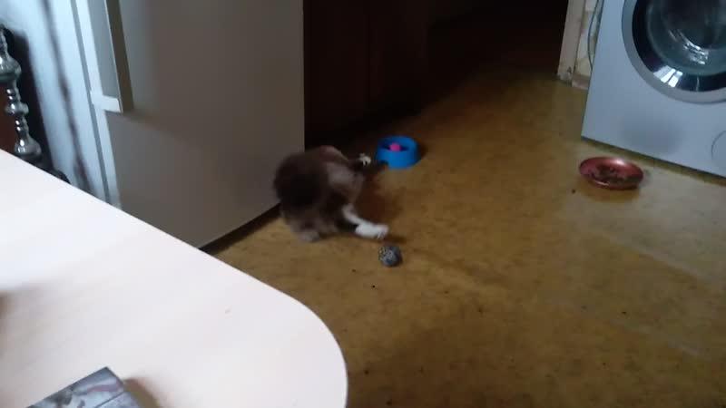 Кузя и игрушка в миске ч.2