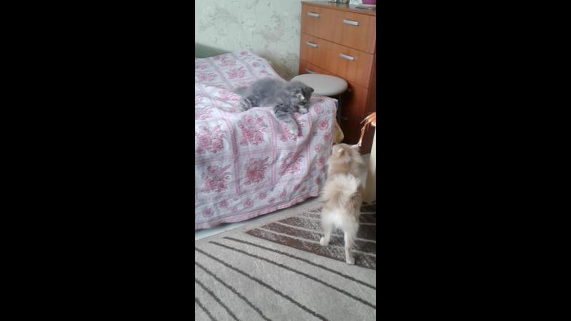 Босик и Бадик