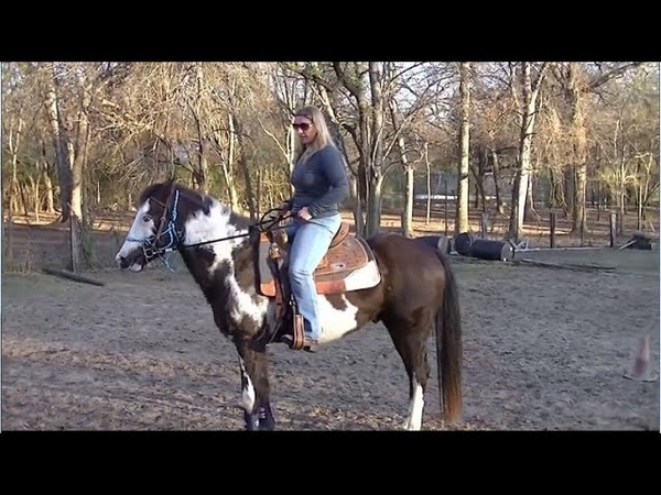How to do the first ride on a horse that hasn't been ponyboy