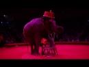 Итальянский Цирк Слоны и Тигры