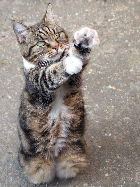 Не брocaйте котиков...