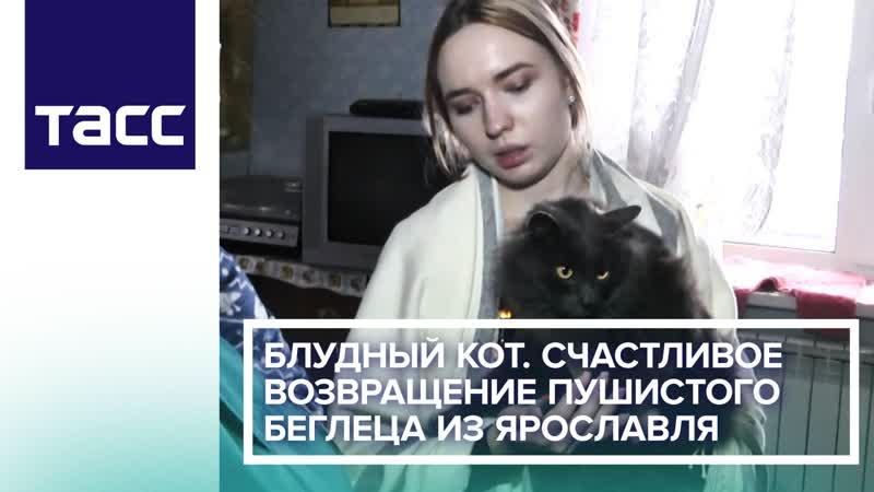 Блудный кот Счастливое возвращение пушистого беглеца из Ярославля