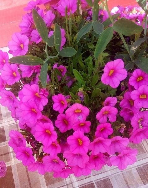 Вот такой цветок купила у бабушки на рынке