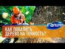 САМЫЙ ПЕРВЫЙ СЮЖЕТ Галилео 🌲 Как повалить дерево на точность?