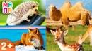Как говорят дикие животные / Развивающий мультик для самых маленьких / Карточки Домана