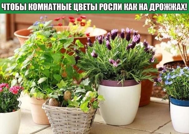Всего 7 приемов, чтобы комнатные цветы росли как на дрожжах!