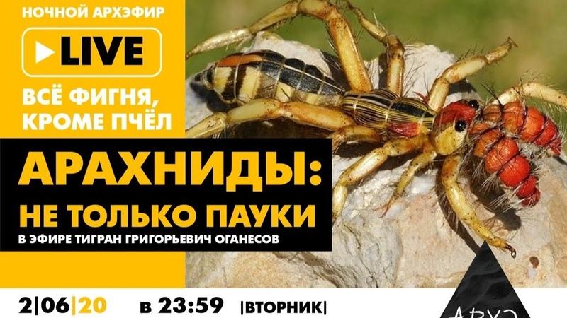 Ночной АРХЭфир в рамках рубрики Все фигня кроме пчёл Арахниды не только пауки
