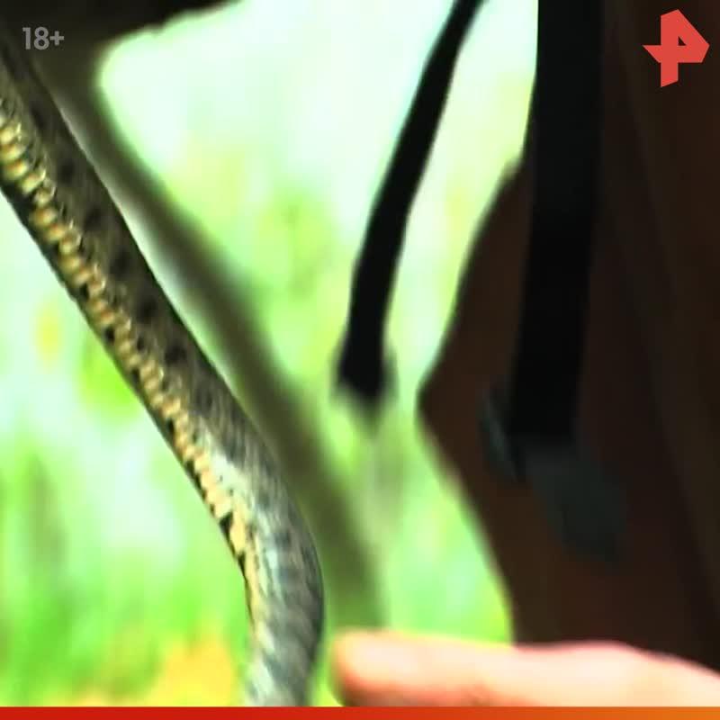 Тимофей Баженов рассказывает ест змею / #РЕНТВ