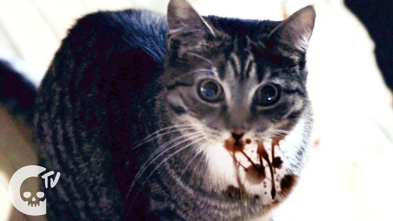 Meow Short Film Crypt TV