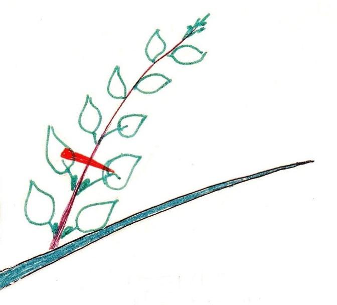 Как сделать Чудо-Дерево, забитое плодами., изображение №2