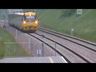 Поезд остановился из-за разгуливавшего по рельсам пса