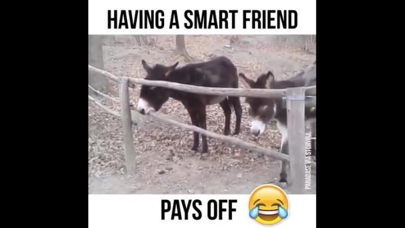 Ein guter Freund