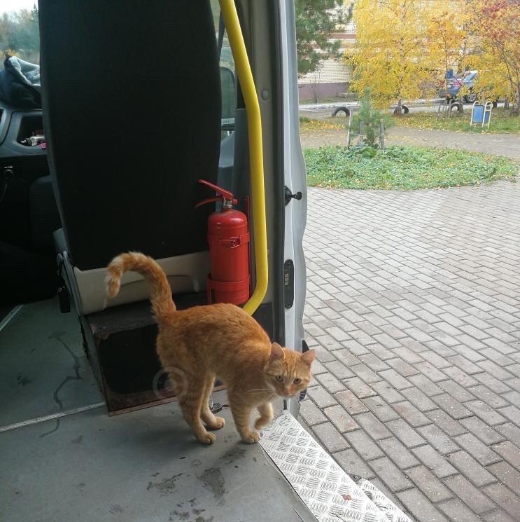 Эй, человек, подбрось-ка до станции Одинцово. Мур