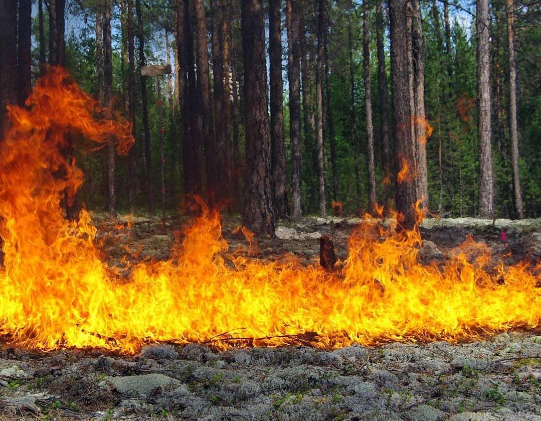 В Петровском районе из-за высокого класса пожарной опасности введены ограничительные меры на посещение лесов