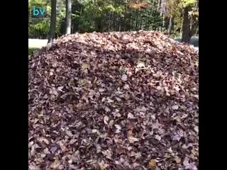 Как вы думаете, сможет ли Стелла найти мяч в этой горе листьев