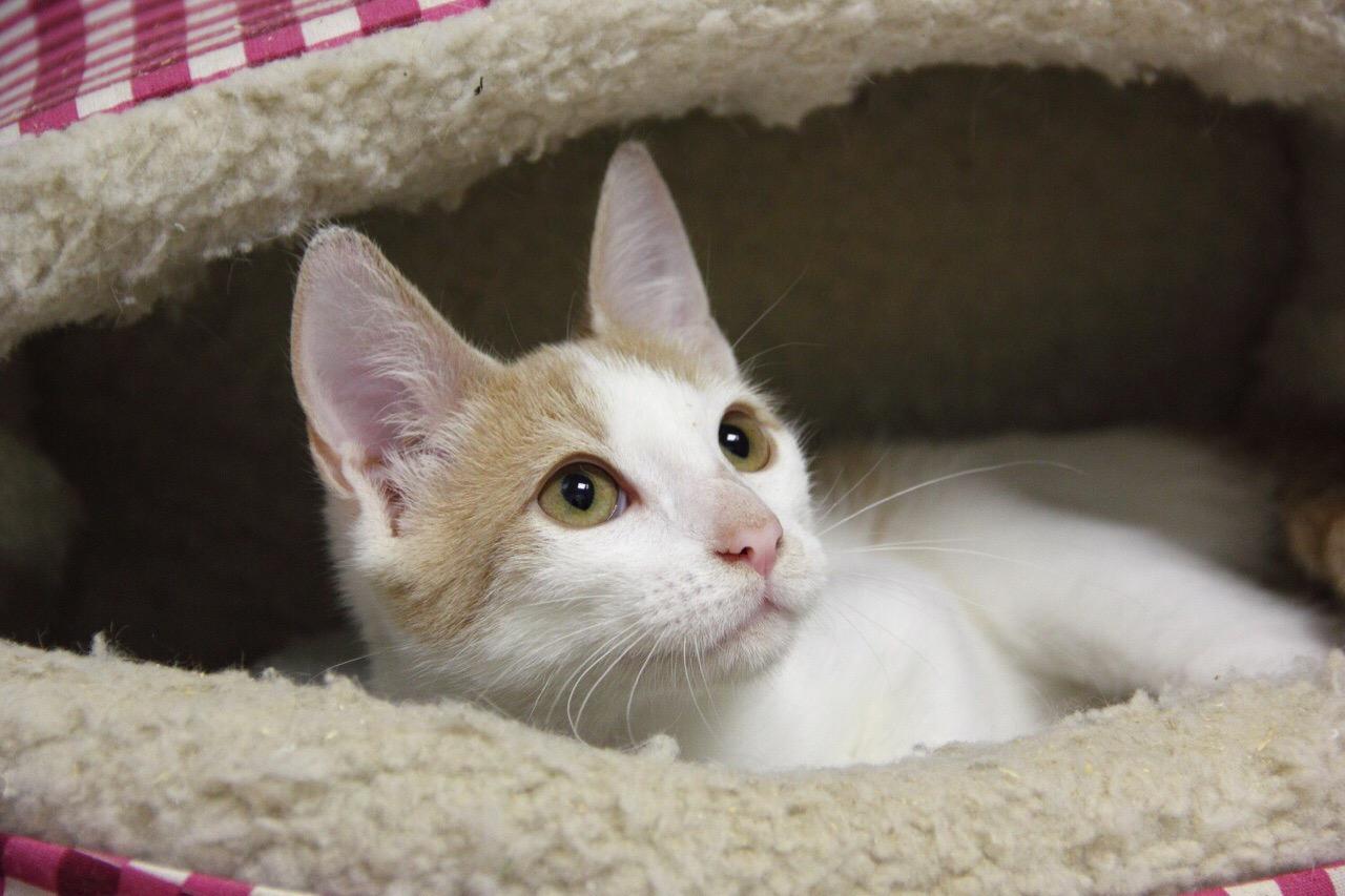Макарчик - очаровательный юный котик в поисках