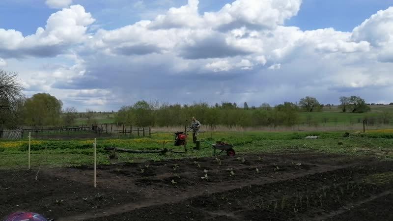 Работа на плантации :)