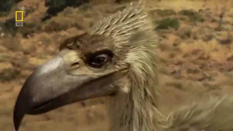 Доисторические хищники Хищные птицы ящеры Документальные фильмы Nat Geo Wild HD