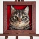 Мимимишные, но очень реалистичные портреты котиков от талантливой японской мастерицы