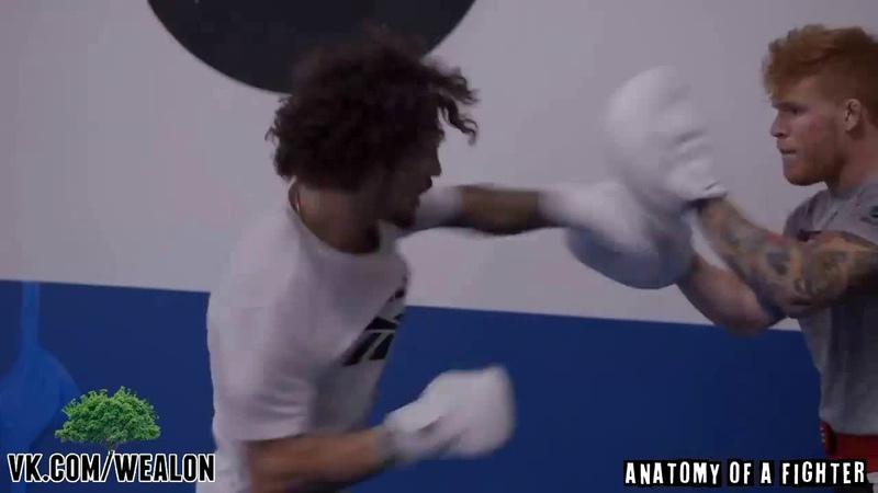 Шон ОМэлли о своём бойцовском стиле ijy jvkkb j cdj`v ,jqwjdcrjv cnbkt