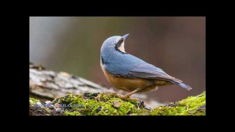 МЕДИТАЦИЯ Sonidos De La Naturaleza, Musica Naturaleza, Sonidos Relajantes De Pájaros Cantando, Musicoterapia