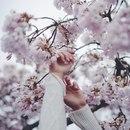 Фотоальбом Иммы Азимовой