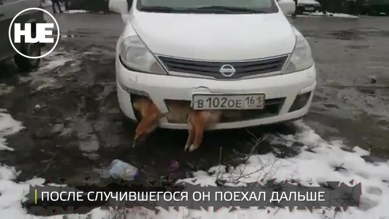 В Таганроге водитель сбил собаку и вместе с ней ездил по городу