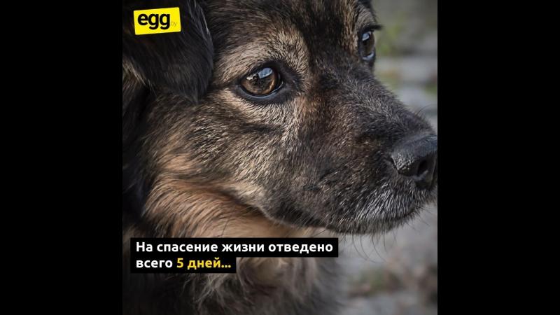 Спасение_собаки