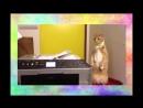 Кот испугался видео прикол СМЕШНО ДО СЛЕЗ Видео приколы про кошек 2016.mp4