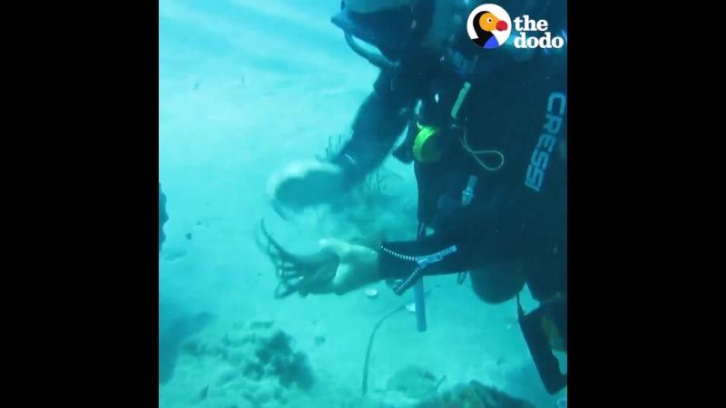 Дружелюбные обитатели океана