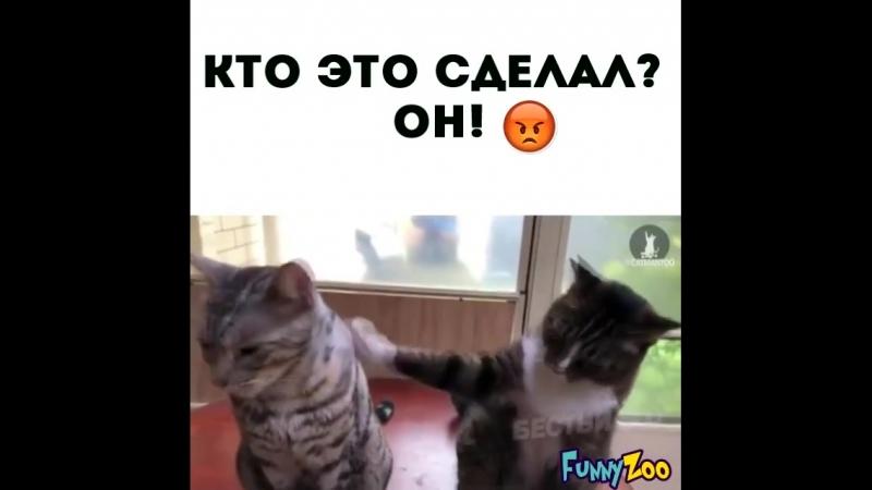 Кто это сделал? 😂