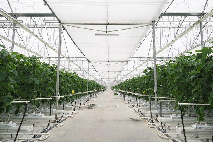 Агропромышленный комплекс в марте 2018 года