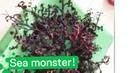 Во Вьетнаме найден морской «монстр» с сотней щупалец
