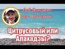 Цитрусовый или Алахадзы Сравнение Сентябрь Абхазия 2018