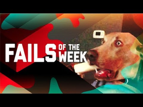 This Dog is Trippin Fails of the Week (October 2018) | FailArmy